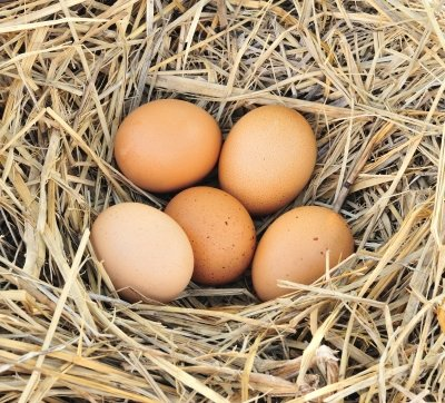 Ovarian reserve determine eggs