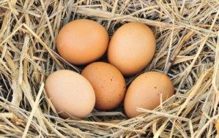 improve egg health